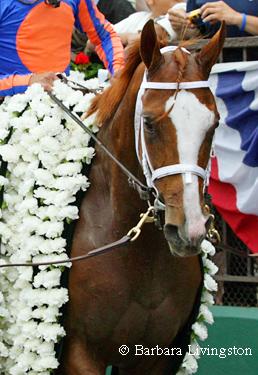 Many horses: Belmont3bl
